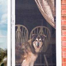 Pet Proof Screens Installed in Milwaukee