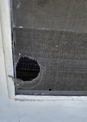 Screen Door Damage Repair